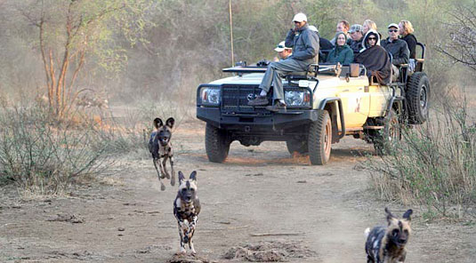 Little Madikwe Hills - Madikwe Game Reserve - Game Drives with Wild Dog