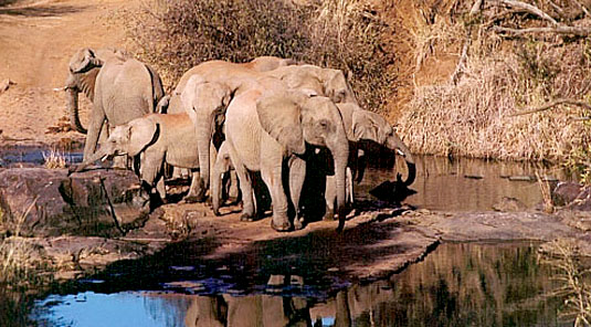 Makanyane Safari Lodge - Madikwe Game Reserve - Waterhole with Elephants